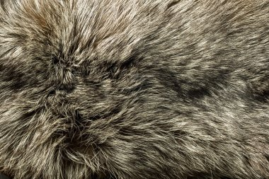 Closeup of beautiful polar Fox fur