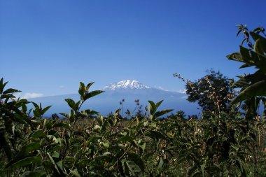 Majestic Mount Kilimanjaro, Tanzania