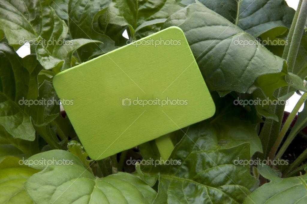 Green Garden Stake with Leaves — Stock Photo © brookefuller #2218825