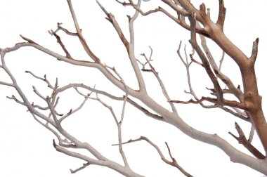 Manzantia Decorative Branches