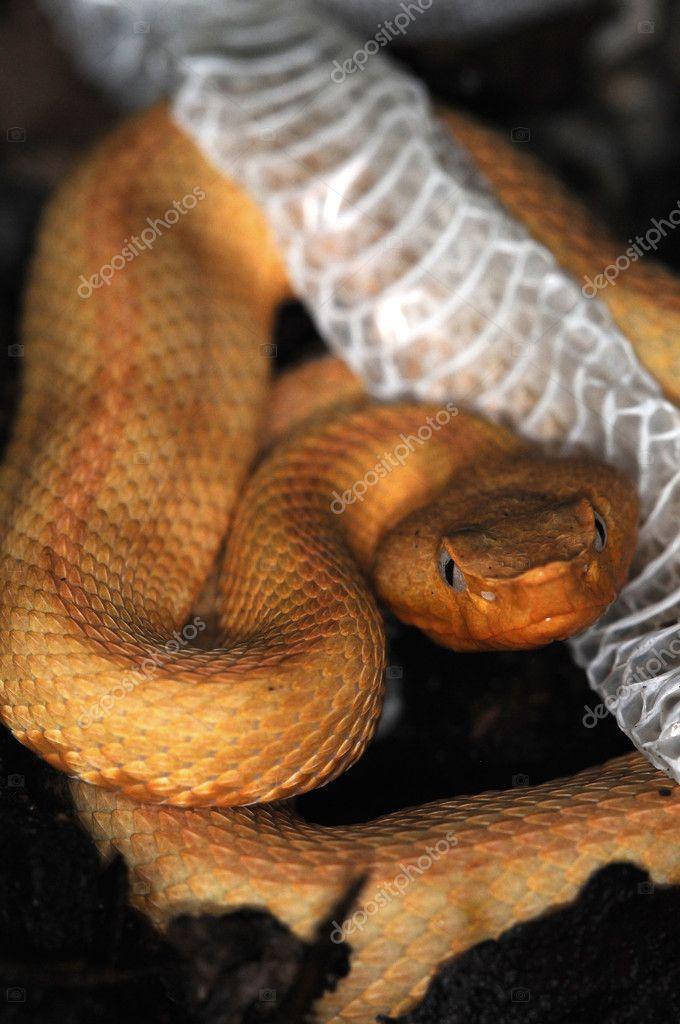 Snake-120