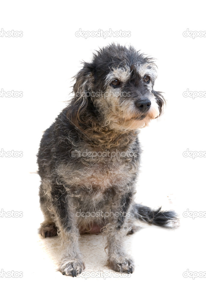 The dog isolated on white background