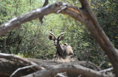 Tumorous look through thicket