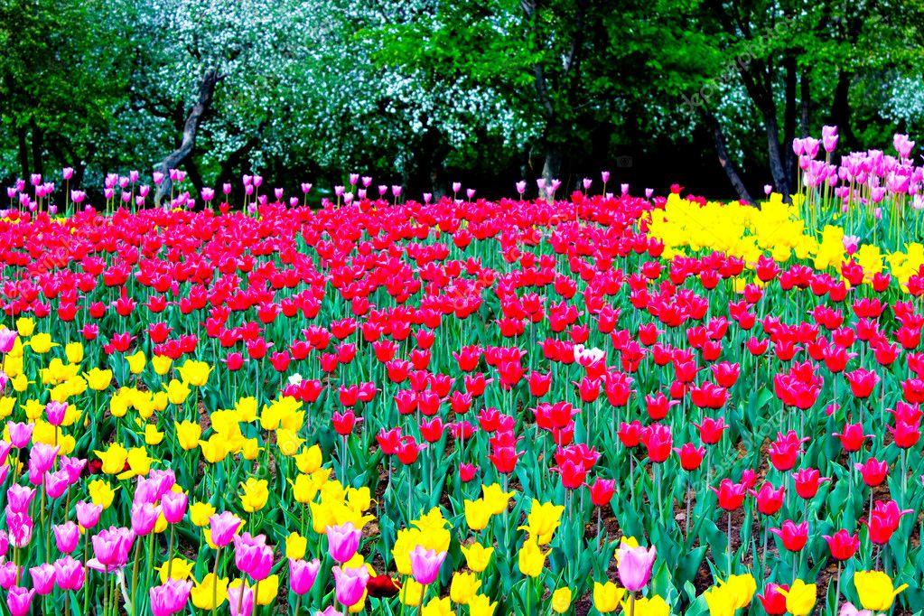 Beautiful park garden in spring