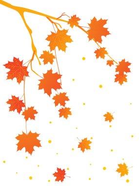 Autumn tree branch, illustration