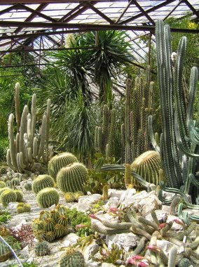 Greenhouse with Cactus