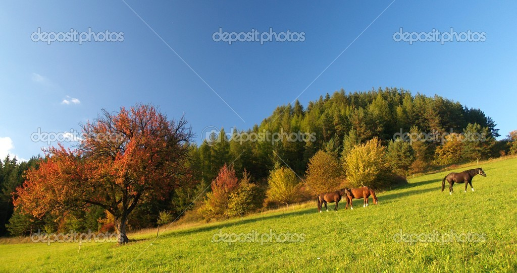 3 Horses and Red tree