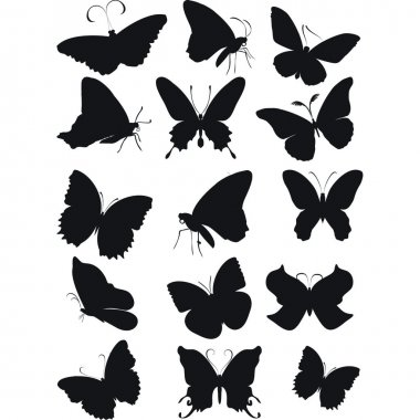 Butterfly.Vector image