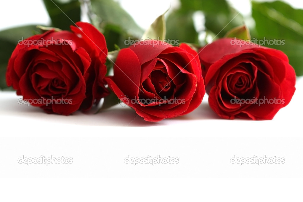 Close-up shot of a red roses
