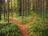 křižovatka v lese