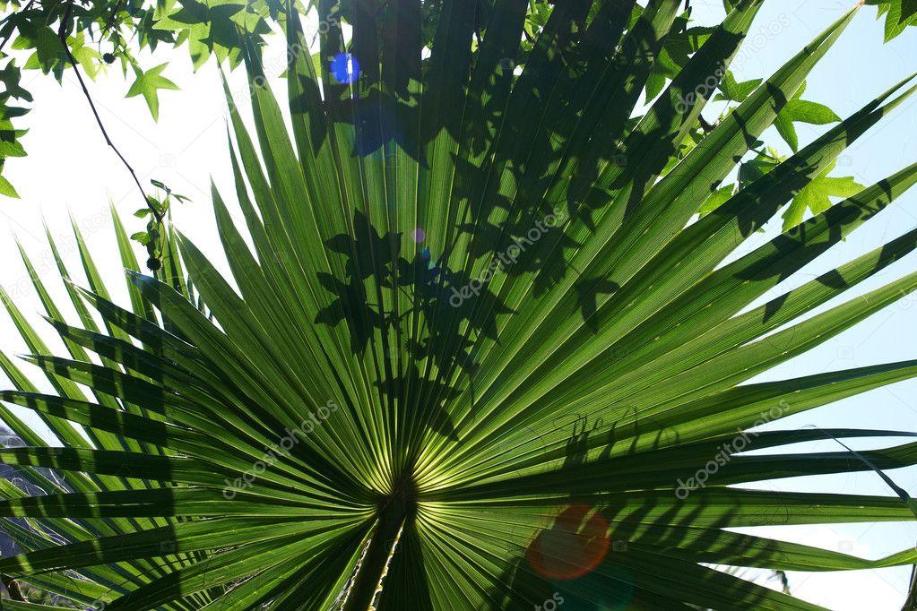 plante exotique verte photographie yanlev 2485266. Black Bedroom Furniture Sets. Home Design Ideas