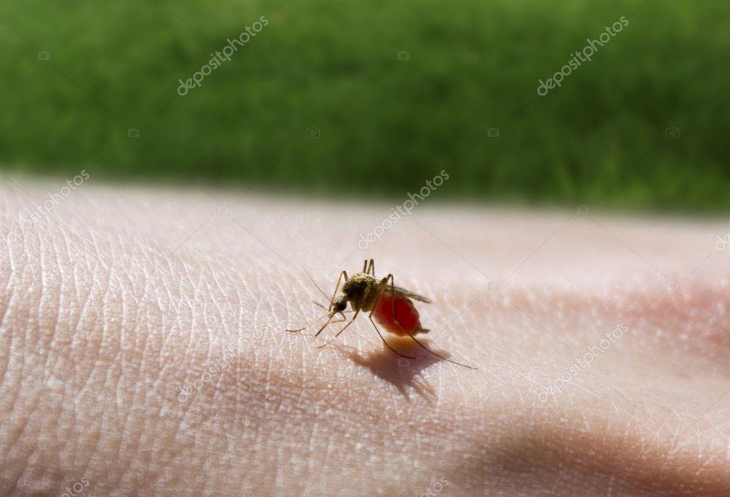 Mosquito sucking a hand