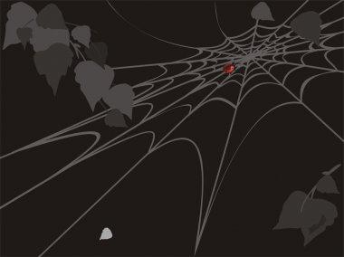 Ladybird on spider web