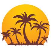palmy a letní slunce