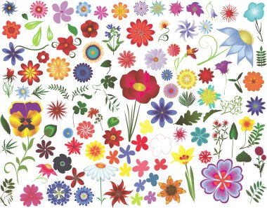 Set of colored vector floral design elements: flowers and leaves stock vector