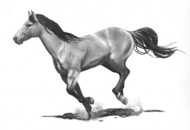 Pencil Drawing of Horse Running