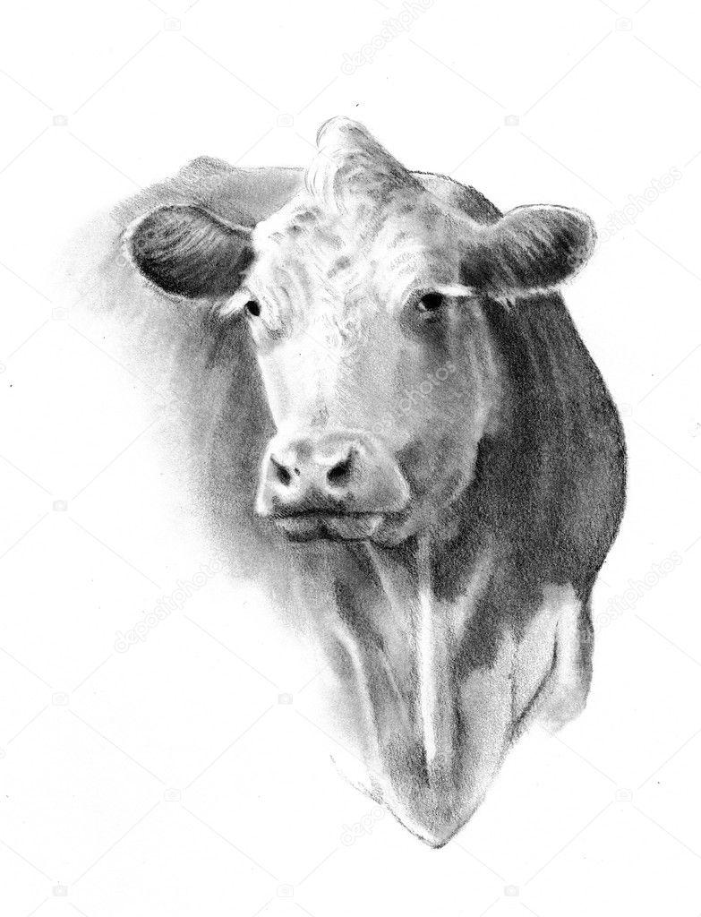 Pencil Drawing of a Cow Head — Stock Photo © joyart #1463942