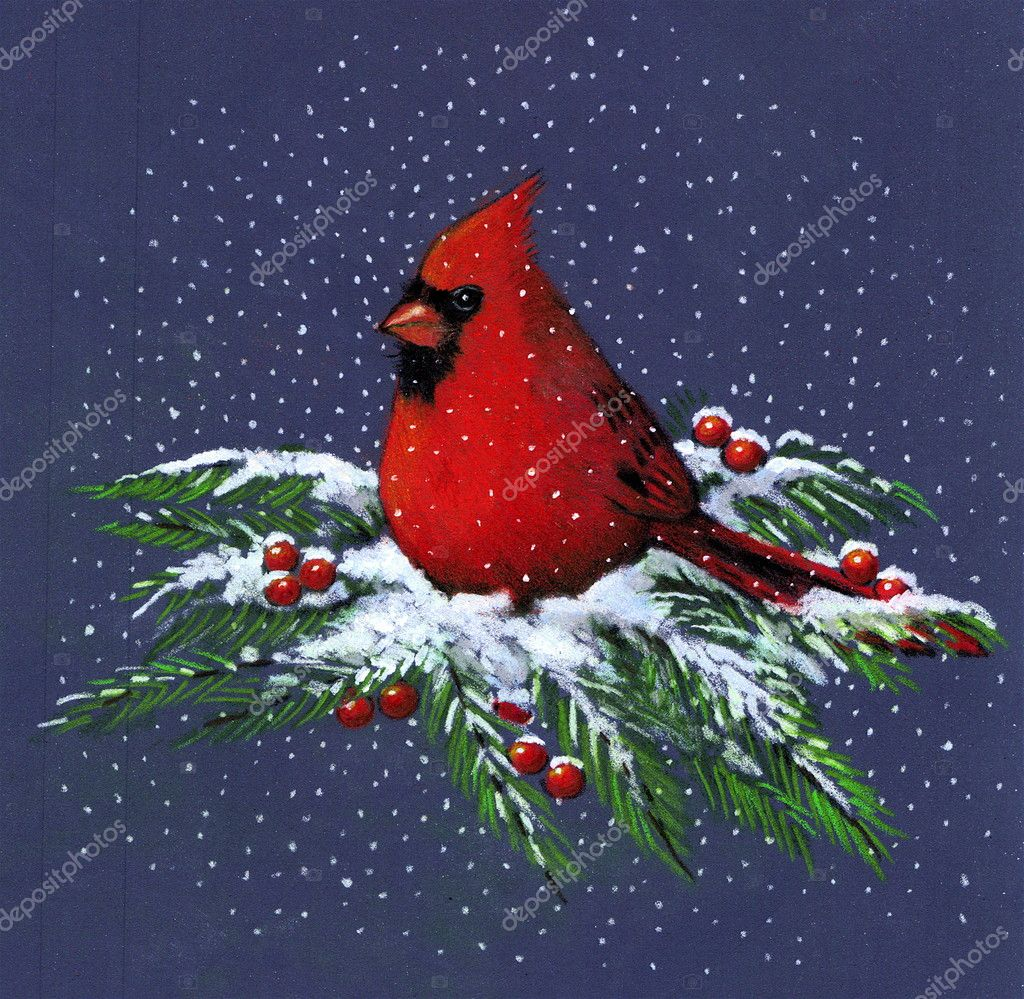 Color Drawing of a Cardinal in Winter