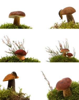 Collection of mushrooms isolated on white