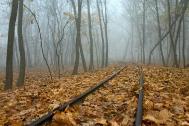 Railing in misty autumn forest