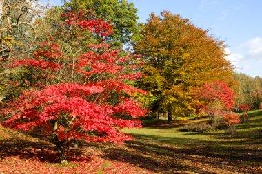 Multicolored autumn forest