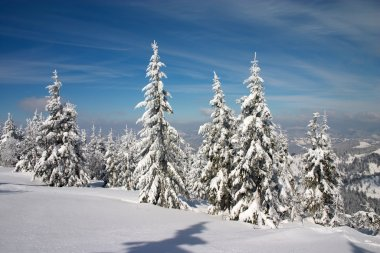 Winter forest in Carpathian mountains
