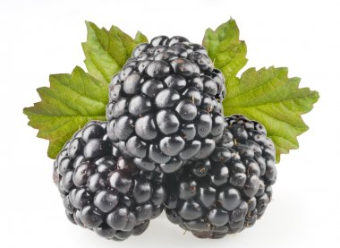 Blackberry fruit objects isolated
