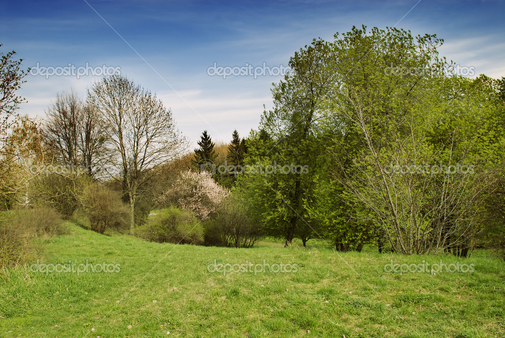 Beautiful spring nature landscape
