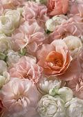 Fotografie Beautiful Colorful Flower