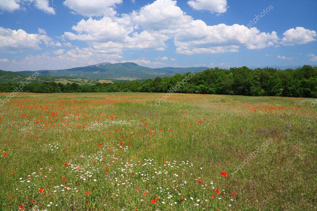 Flourishing mountain meadow