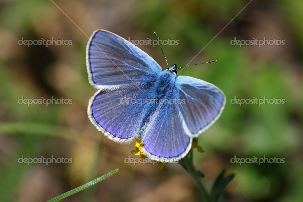 Blue day butterfly