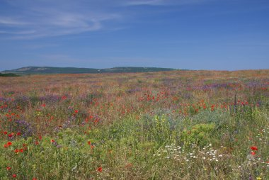 Flourishing steppe