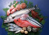 Fotografie čerstvé a zdravé ryby mořské plody