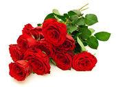 Růže červené
