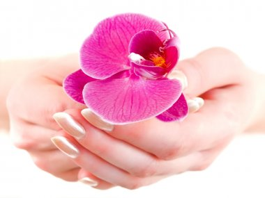 Orchid in woman hands