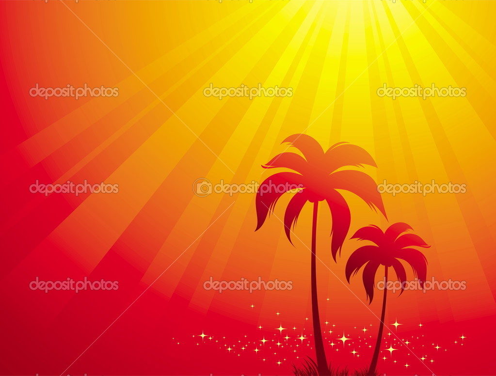 Palm trees & sunlight