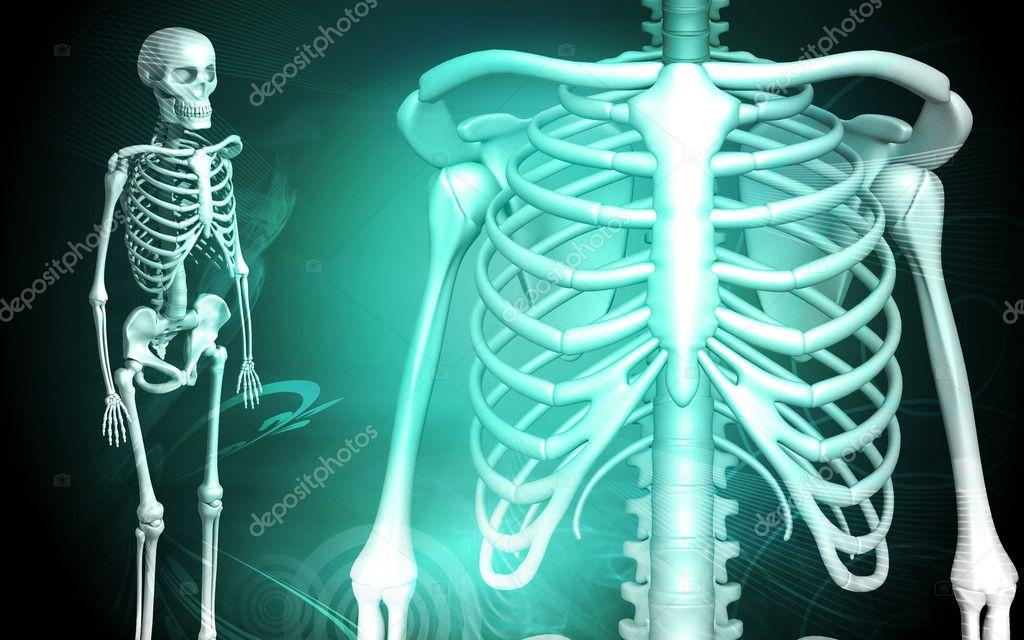 esqueleto y costilla humana — Foto de stock © rbhavana #2673017