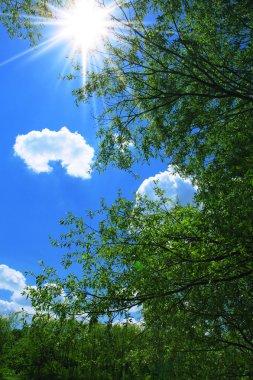 Summer day at noon