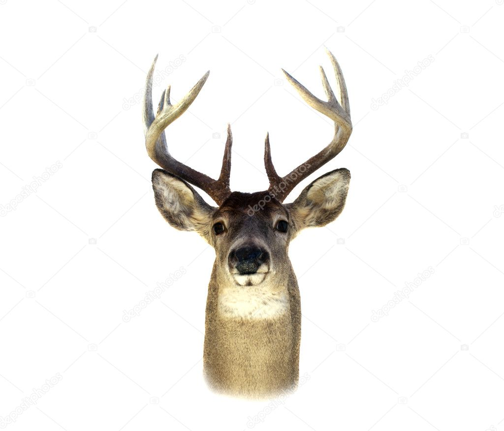 whitetail chat Recoil charts for popular hunting calibers  hunting discussion forum and chat on whitetail deer hunting- bow hunting- muzzleloader hunting- fishing- firearms- outdoor news- cleaning game.