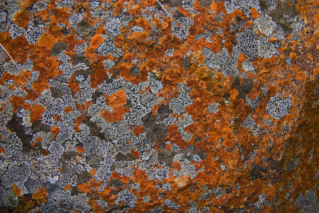 Colourful Lichen growing on rocks