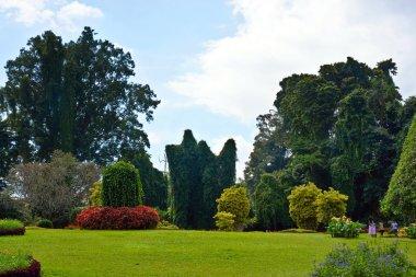 Peradeniya Botanical Gardens. Sri Lanka.