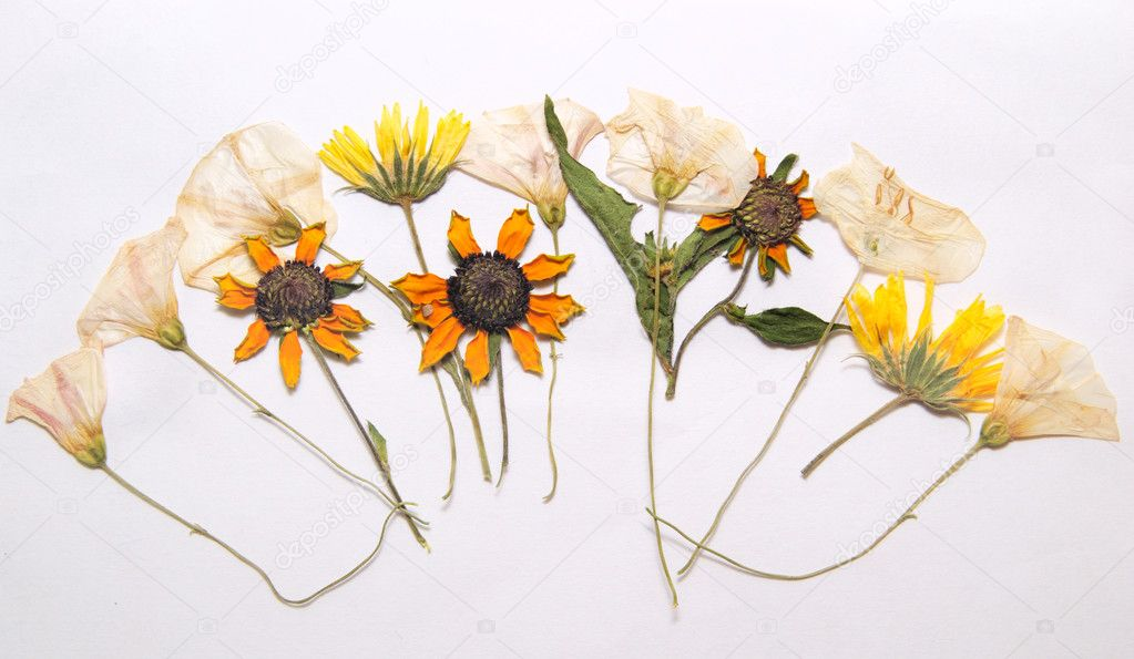 Abstract arrangement of pressed flowers