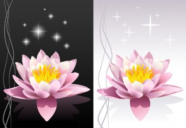 Vector detailed lotus flower