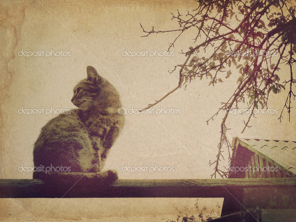 A cat sitting on a wooden beam