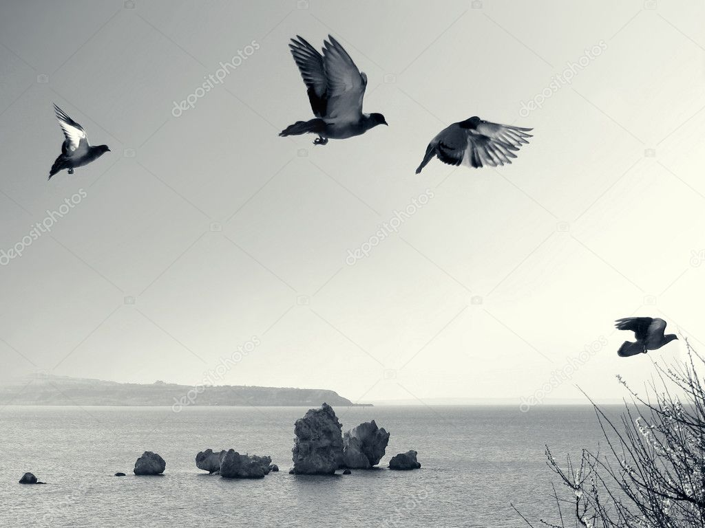 Flying birds
