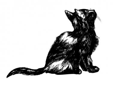 Drawing of a cat looking up