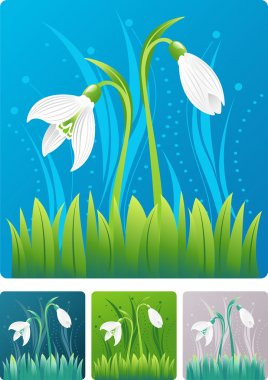 Spring nature illustration with snowdrop