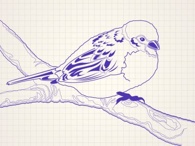 Hand drawn sparrow bird on a branch