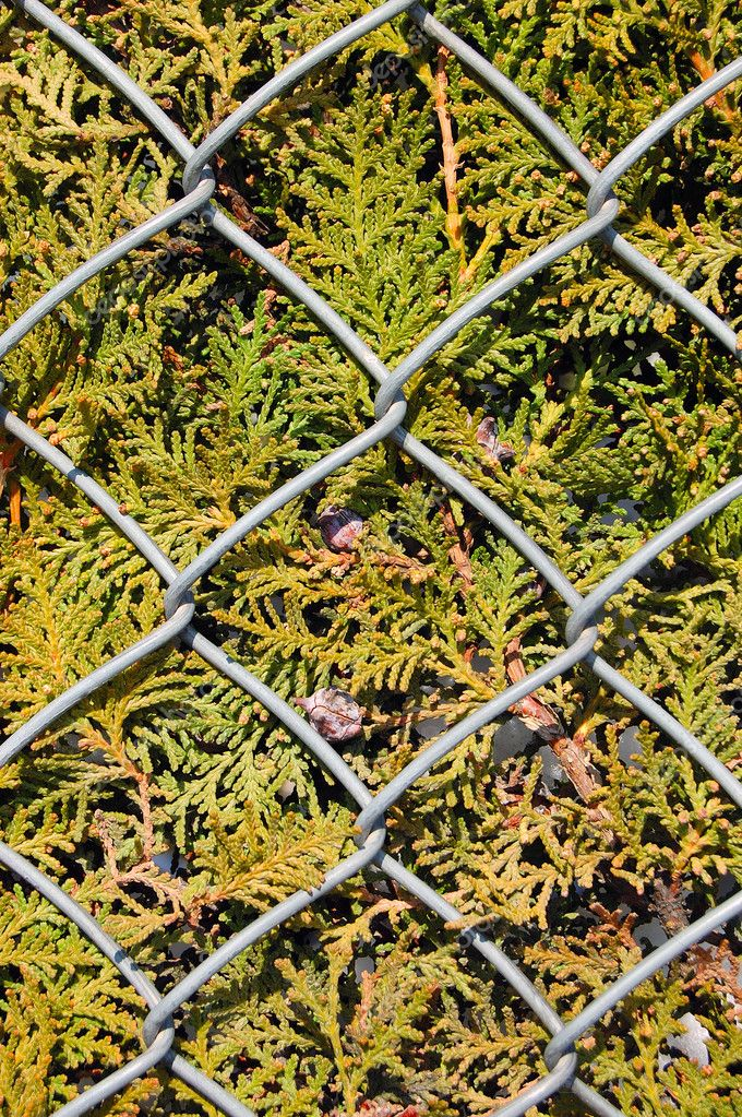 Wire metal fence and fir tree texture
