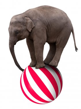 A baby circus elephant balancing on a big ball stock vector